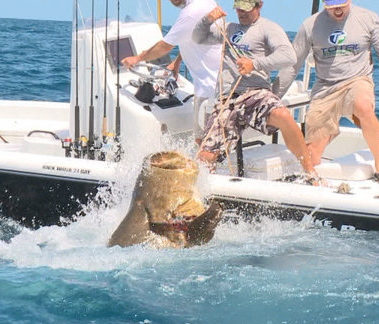 """Bo hand lines goliath grouper"""