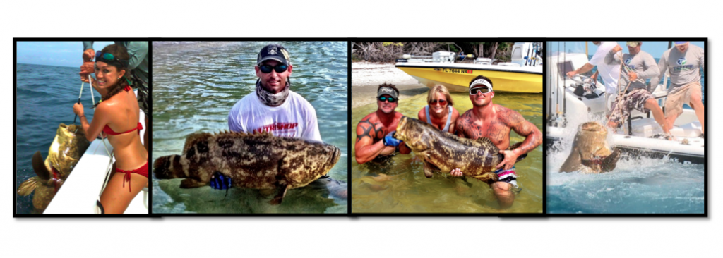 """Goliath Grouper Tug-O-War"""