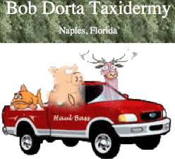 """Bob Dorta Taxidermy"""