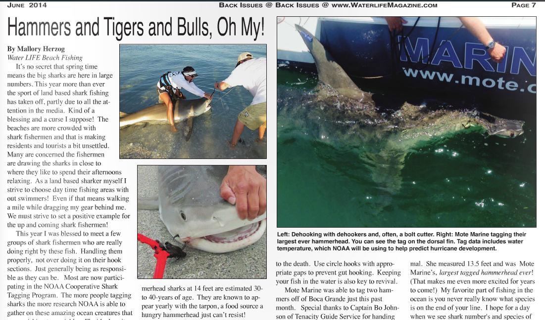 """""""water life magazine shark article"""""""