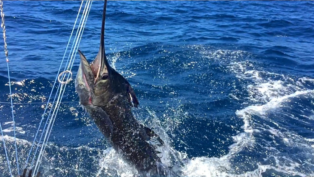 guatemala sailfish