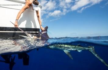 Cabo Sport Fishing