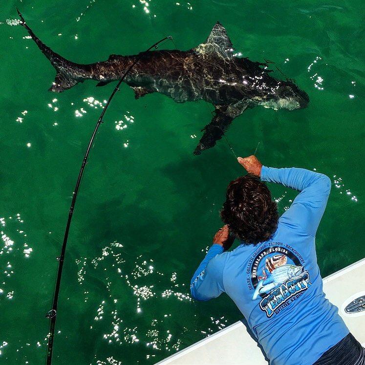 huge bull shark